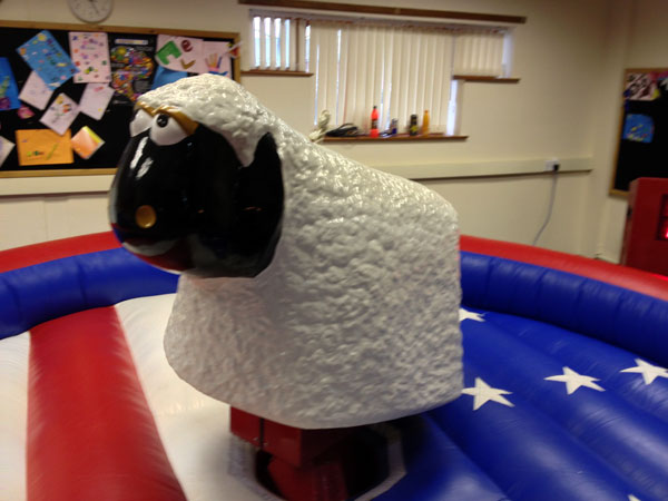 Rodeo Sheep