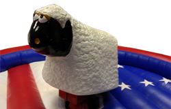 Ride on rodeo sheep for hire